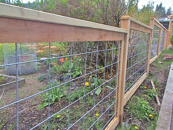 Galvanized Hog Panel And Cedar Fence Fences In 2019