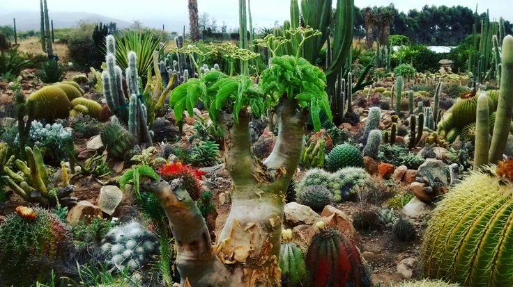Cactus Garden, Robertson South Africa