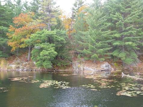 Bird lovers and naturalists dream property. 81.5 acres of undeveloped, pristine land.  A natural habitat with 4 ponds and approximately 200 ft of undeveloped waterfront on Snake River.  One hr from Ottawa, 4 hrs from Toronto, close to Pembroke, Renfrew, Cobden, Eganville  Property taxes $630. Asking price $129k negotiable http://www.real-estate-ontario.ca/Listing/ViewListingDetails.aspx?ListingID=124673020 http://youtu.be/PR4ylWU3mFw exact location at https://goo.gl/maps/Ee1St