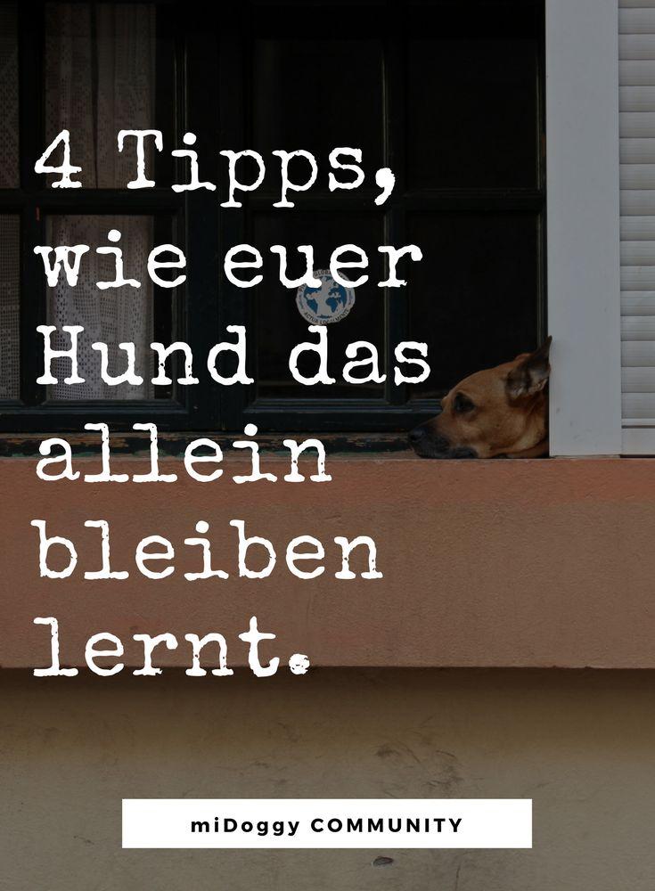 Hier erfahrt ihr es. || Hund || Tipps || Ideen ||