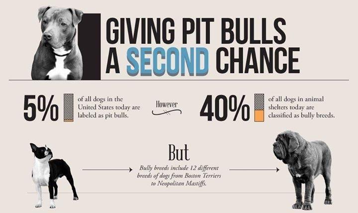 Nationalpitbullawarenessmonth Beagle Dogs Cats Necklaces