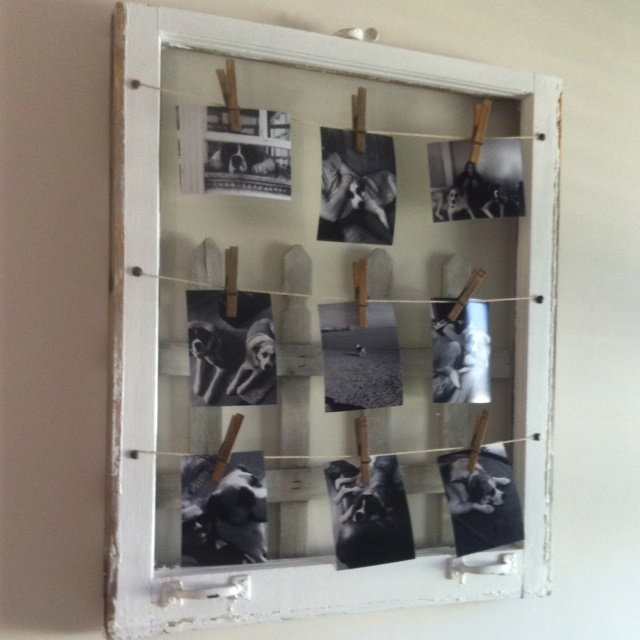 elegant vintage window frame art featuring our st bernards with old window frame ideas - Window Frame Art