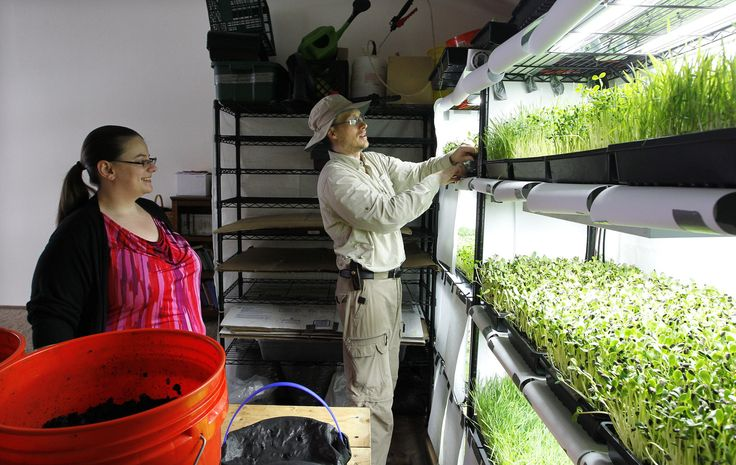 "In his three-bedroom west side Milwaukee apartment, Tony Farrell — also known as ""Farmer Tony"" — grows microgreens with his wife, Hillery Farrell."