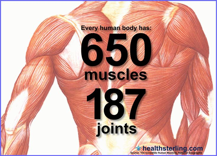 60 best the human body images on pinterest | human body, human, Muscles