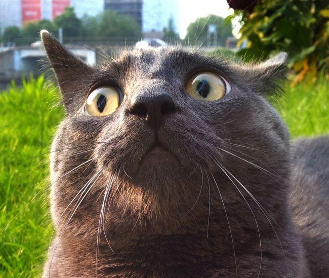 картинка непонимающего кота направлено прокачивание