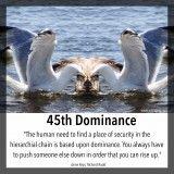 45 Dominance, Shadow
