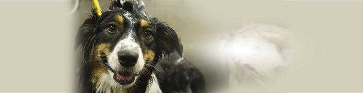 39 best edgewater dog walking images on pinterest dog walking annapolis original dog wash and coffee bar formerly muddy paw wash solutioingenieria Gallery