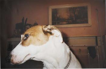 Richard Billingham, Untitled (Family Dog), 1995