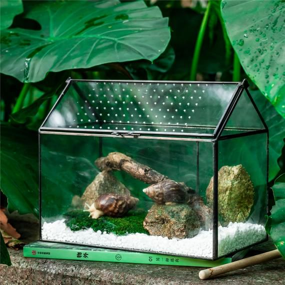 Swing Lid Latch Large Handmade Geometric Glass Close Terrarium Box House Shape