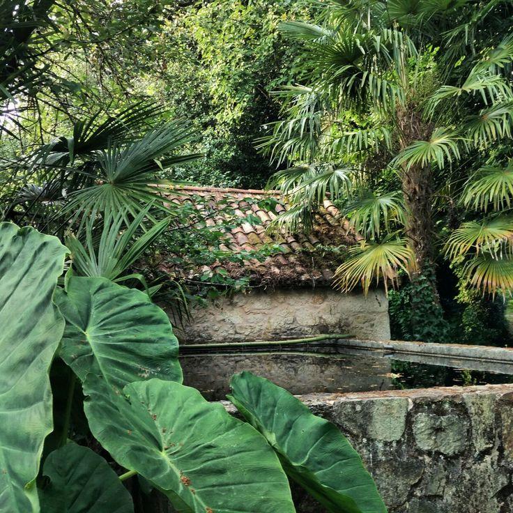 Galicia tropical - Pazo de Santa Cruz de Rivadulla  #plantastropicales #galiciatropical #selvagallega #jardinbotanico #jardingallego #pazoconhistoria #pazodesantacruzderivadulla #pazodeortigueira #vedra #coruña #muycercadesantiago #cercadesantiagodecompostela
