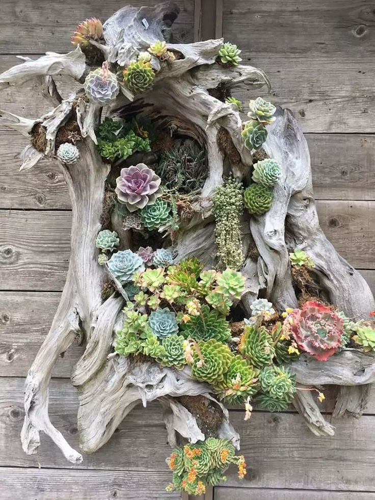 Rustic Gardens Welcome You Home (With images) | Succulent ...