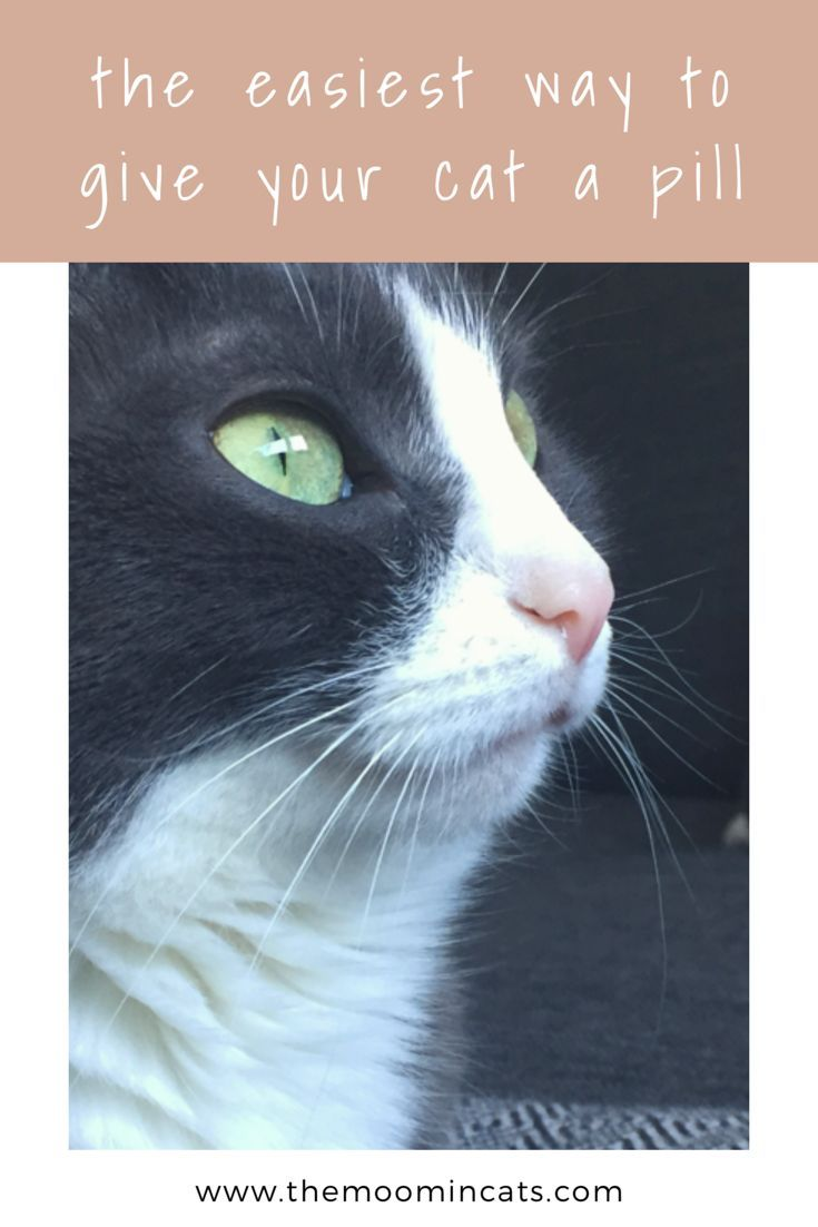 The Moomincats Blog – The easiest way to give your cat a pill