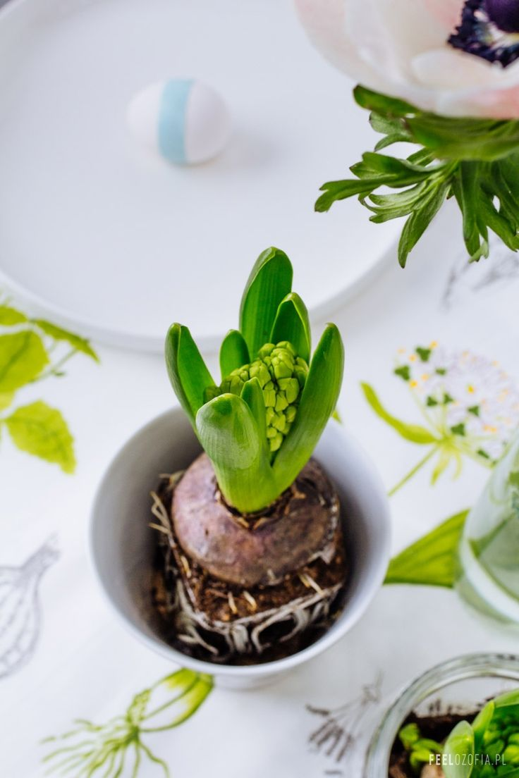 Wiosno przybywaj! Wielkanocna stylizacja stołu nr 2 :-) | Feelozofia