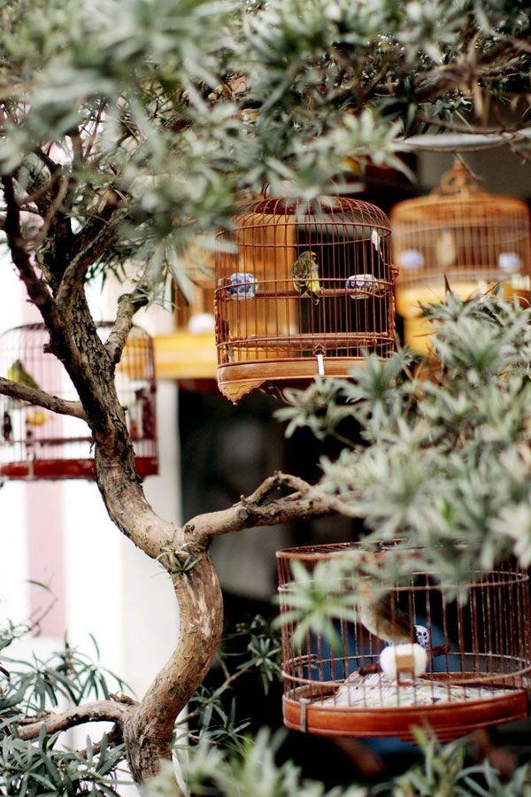 bird market | hong kong