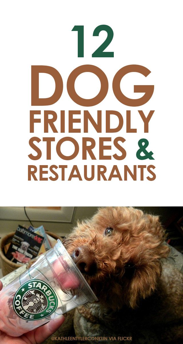 12 Dog Friendly Stores & Restaurants http://iheartdogs.com/12-dog-friendly-stores-and-restaurants/
