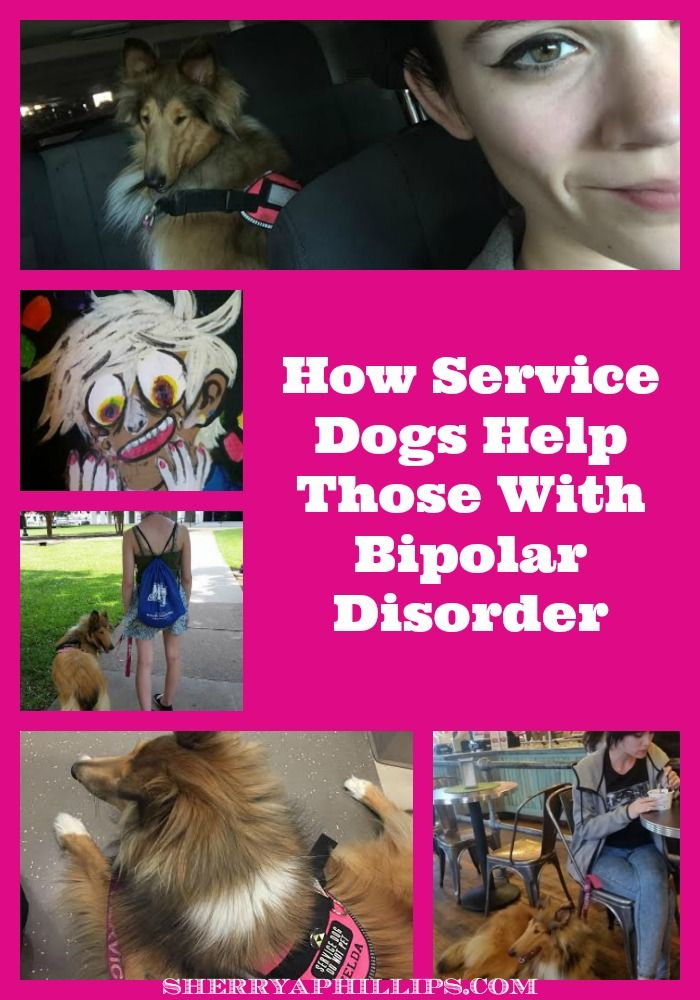 How Service Dogs Help Those With Bipolar Disorder at http://sherryaphillips.com/what-are-service-dogs/