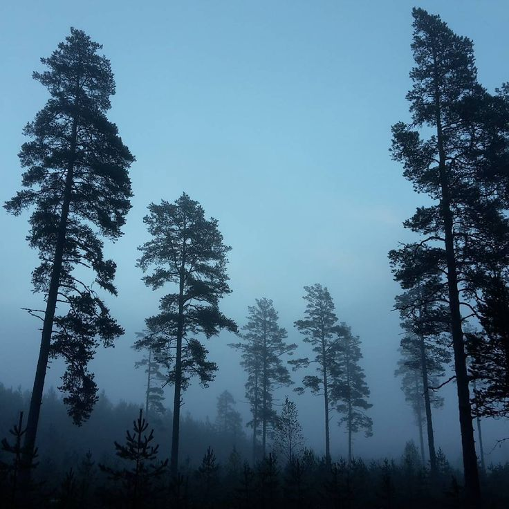 «#лес #деревья #утро #раннееутро #туман #природа #forest #woods #trees #fog #morning #earlymorning»