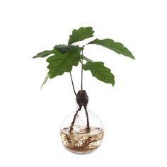 Beskrivning, börja i oktober. Formgivaren Estrid Ericson designade den här vasen speciellt för ekollon.