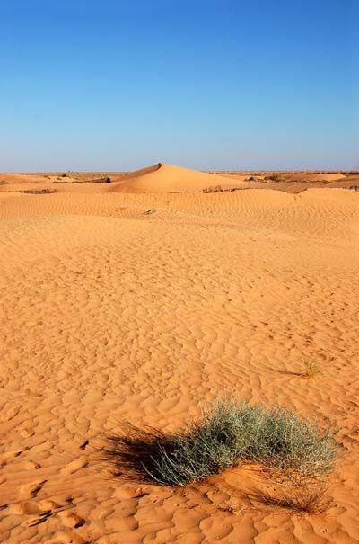 Désert dans la région de Tozeur. Tunisie.