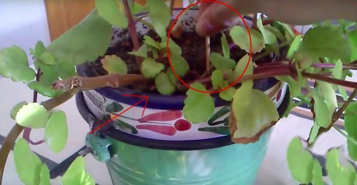 En insérant cet objet dans la terre, sa plante n'a jamais été plus vivante!
