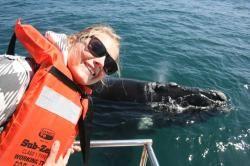 Whales in #plett #plettitsafeeling #whales #bucketlist