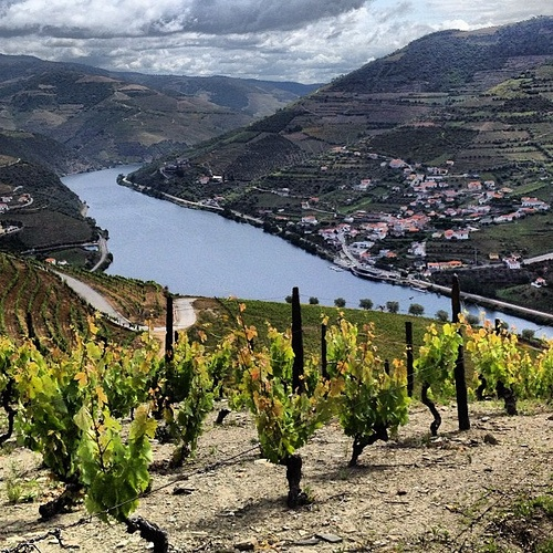 Looking down at the Douro River in Portugal from the Vineyards of Quinta dos Murcas. #Douro #Portugal #vineyards