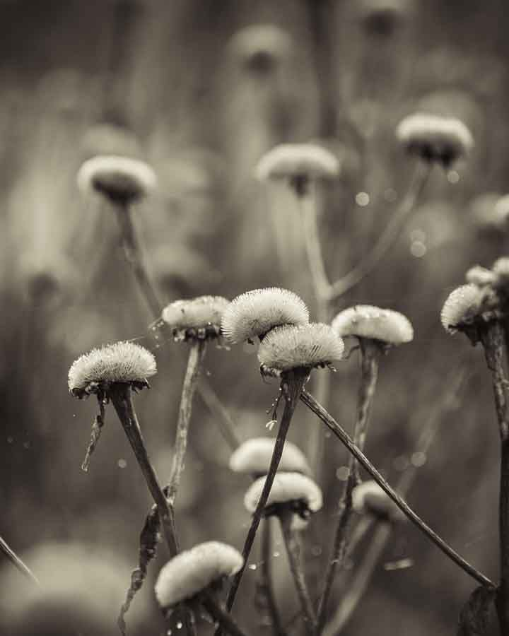 The remains of a beautiful flower. Image©K Woodland/K Woodland Photography.