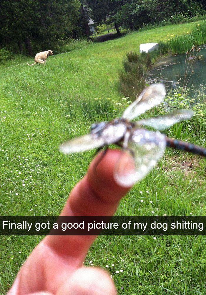 Snapchats ihres Esels