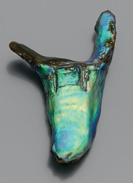 """Importante perle """"abalone"""" multicolore de forme baroque sur papier. Accompagnée: - d'un rapport d'identification du G.I.A. n°10307106 du 26 février 1998 précisant perle abalone pesant 93,50 ct (374 grains).… - Beaussant Lefèvre - 25/06/2015"""