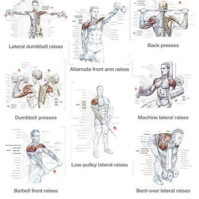 Upper body training