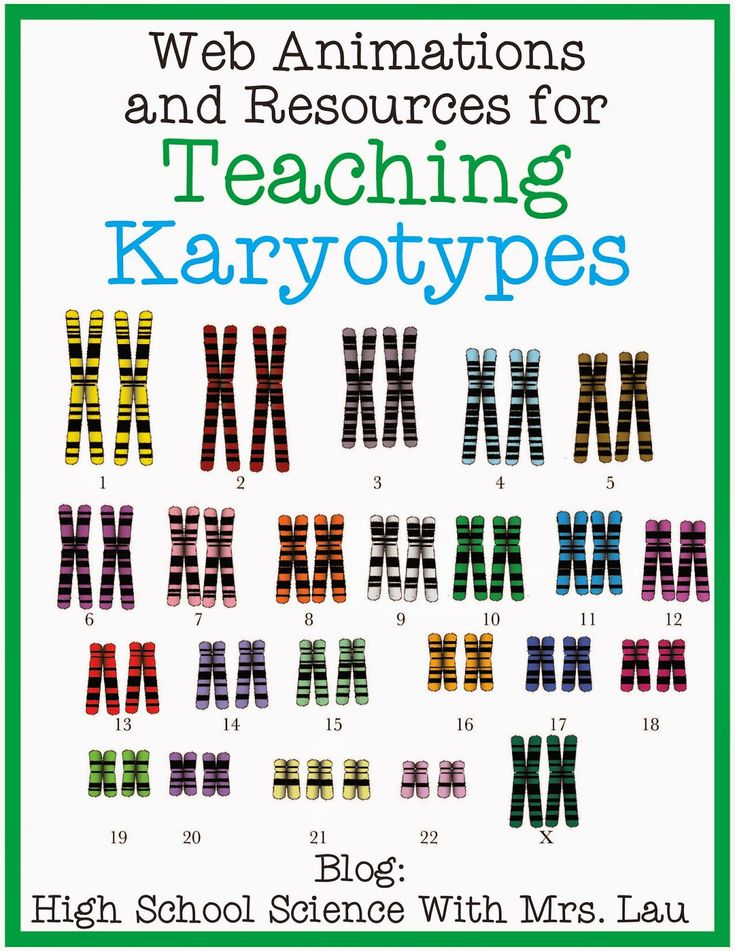 1000 images about karyotype on pinterest activities biology and student. Black Bedroom Furniture Sets. Home Design Ideas