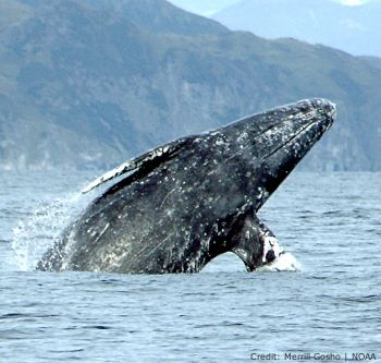 Add your name to protect the Atlantic and Arctic oceans.President Obama: Please keep protecting the Atlantic and Arctic oceans