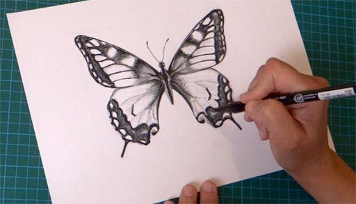 Comment dessiner un papillon facilement, étape par étape :