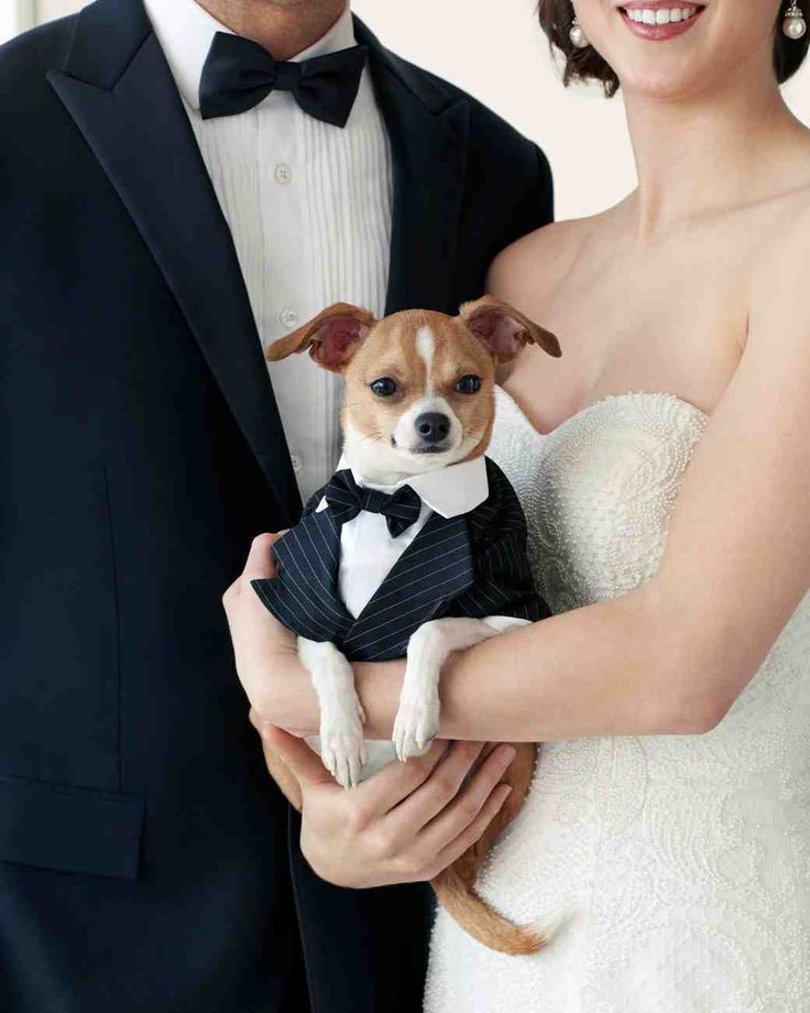 1000+ images about Glamorous Pets on Pinterest