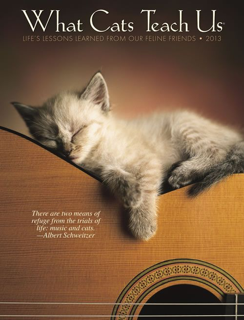 What Cats Teach Us 2013 Engagement Diary 57241