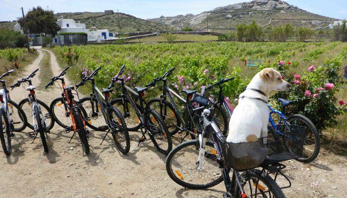 Yummy Pedals--Mykonos