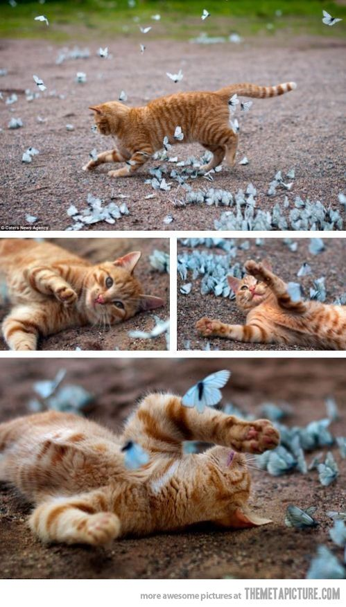 Just a cat and butterflies.