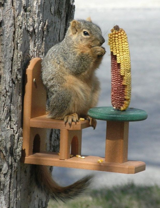 While some gardeners try to deter squirrels from staying for a snack, others put out the red carpet treatment, or in this case a cozy seat to enjoy some corn on the cob.  #garden #ad #ebay