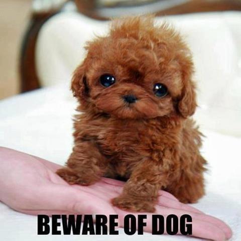 small dog, big bite!