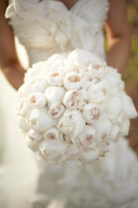 White peonies for the #wedding bouquet <3 - will you be going for lots of colors or a more simple bouquet?