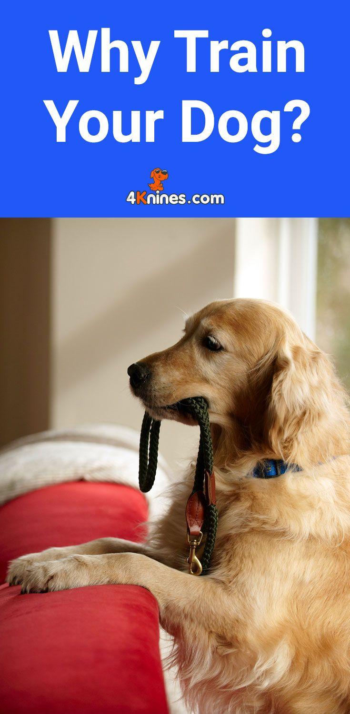 Why Train Your Dog Training Your Dog Dog Training Barking Your Dog