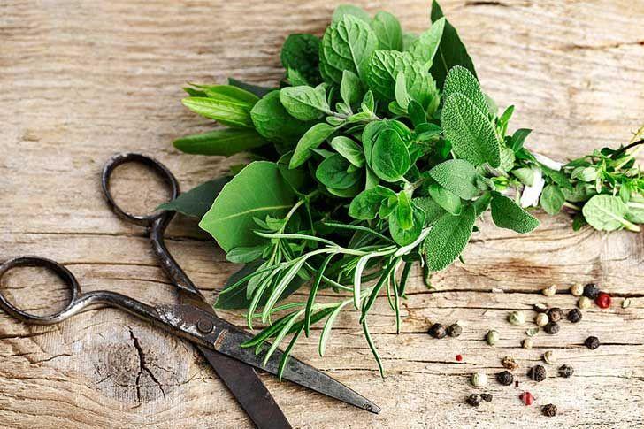 8 vegetales y hierbas que puedes plantar después de comerlas y volverán a crecer siempre