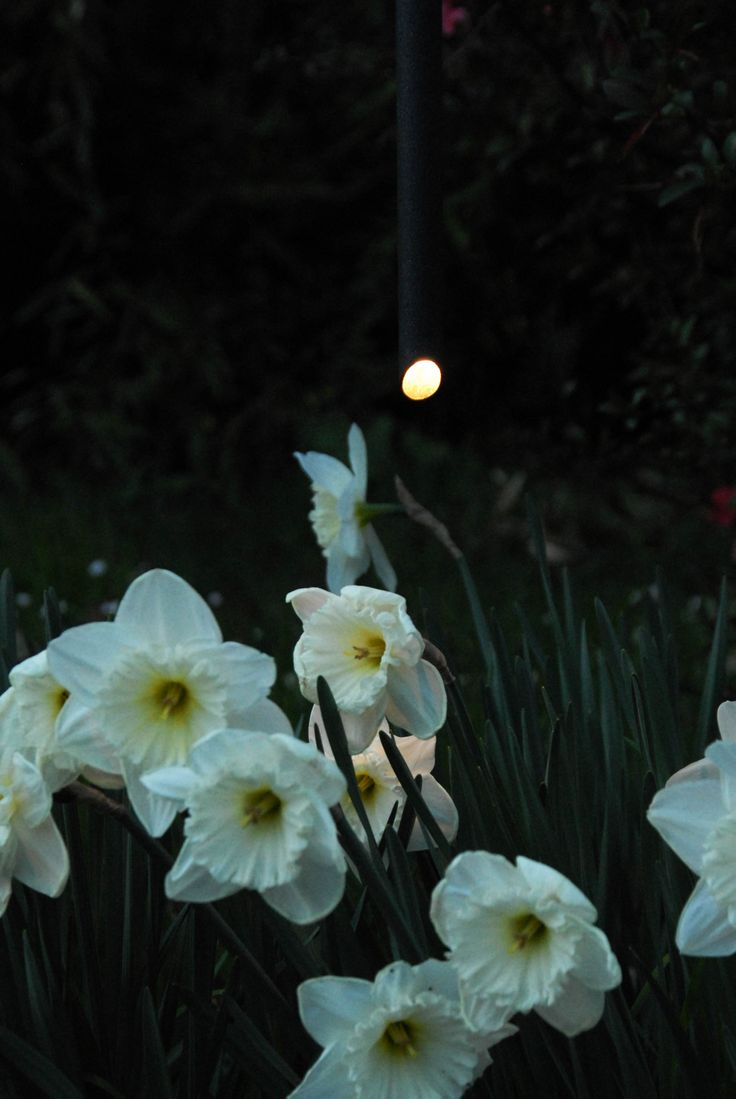 Enjoy your garden even at night... LED Oudoor lighting collection. Made in Italy