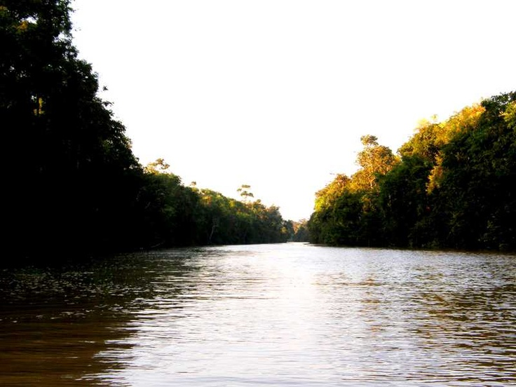 Klias River Cruise in Kota Kinabalu. Not to be missed if you want to see proboscis monkeys & fireflies at night  http://pinterest.com/pin/260786634642904289/ If you travel to South East Asia, climbing up Mount Kinabalu is a must! http://www.kinabaluholidayhome.com/kota-kinabalu-sabah-borneo-tour-packages-and-activities.html