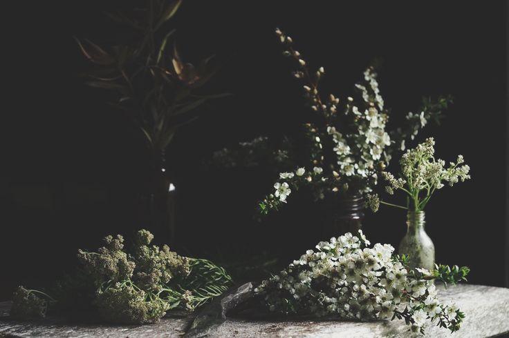 australian natives | studio life | slow living
