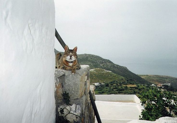 «The logic cat» © Mauricio Ricardez Mendez, #Patmos
