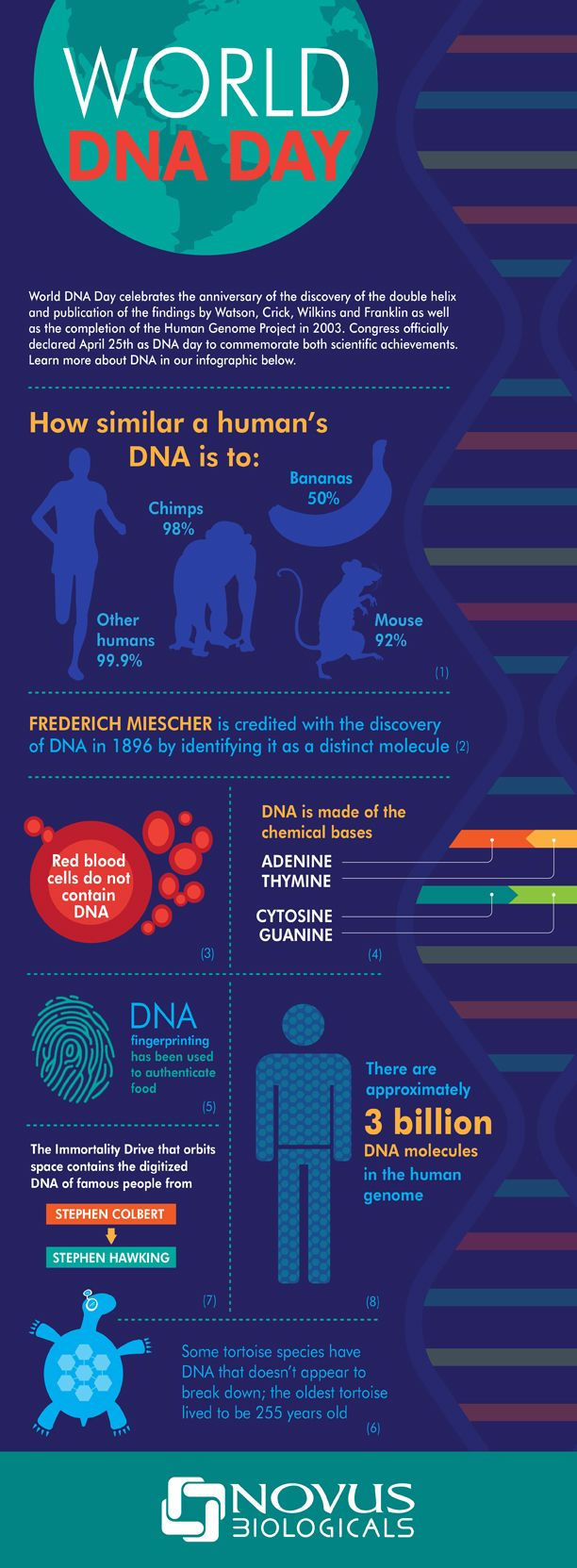 World DNA Day Infographic