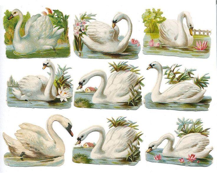 Victorian+swans+1.jpg (942×751)