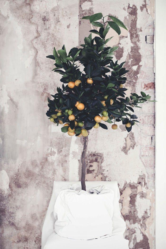 175 best outdoors garden images on pinterest weddings orange tree in pot as a wedding decoration wedding gamos junglespirit Choice Image