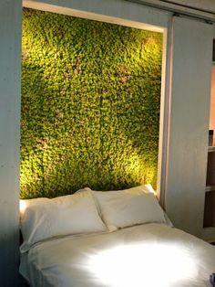 ponad 25 najlepszych pomys w na pintere cie na temat moosbilder fototapete graffiti moos. Black Bedroom Furniture Sets. Home Design Ideas